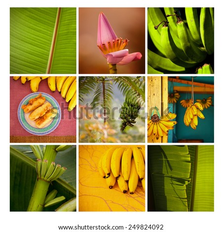 Banana leaves, stem and flowers, exotic flowers, bananas on mosaic of exotic places. Fresh banana, fried banana, Indonesia. Postcard from holidays. Summer. Nobody.