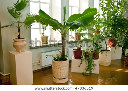 tropical house plants