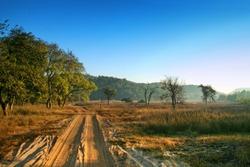 Bandhavgarh National Park, Madhya Pradesh, India
