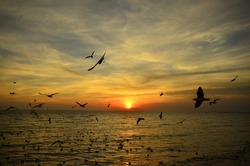 Bangpoo is a place where tourists will come to see the gulls that escape winter in Thailand. In addition to watching the seagulls. Bangpoo is also a popular spot for sunsets.