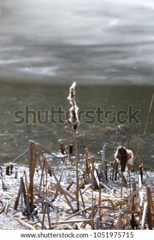 Bank cover of frozen plants in winter #1051975715