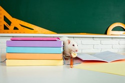 Banner back to school. White rat eating sitting on book. Design with copy space