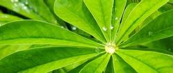 banner for website, green leaf background