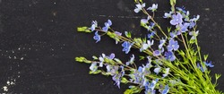 banner for website, Veronica officinalis flower on black background space for text