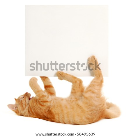 banner in kitten's paws isolated on white background
