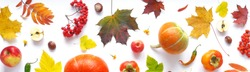 Banner of autumn yellow, orange and red maple leaves, vegetables and fruits isolated on white background, top view, flat layout. Creative pattern, autumn background. Pumpkins on a white background.