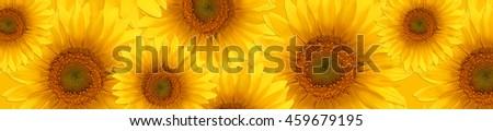 banner panorama pattern flower sunflower  summertime  #459679195