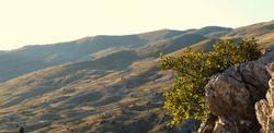 Banner. Stone and tree with leaves, blurred background, uneven terrain of Bjelasnica mountain. On the mountain Bjelasnica, Bosnia and Herzegovina.