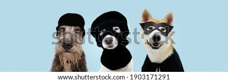 Banner three funny pets dog robbers and hero wearing balaclava ski mask. Isolated blue background. Carnival or halloween concept. Сток-фото ©