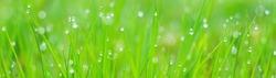 Banner - website header template - Green Grass webdesign - webdevelopment - spring Nature