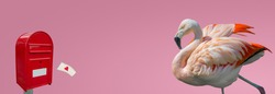 Banner with beautiful rosy flamingo waiting for a love letter from a red post box at smooth light pink gradient background with copy space, closeup, details. Love, dating and glamour concept