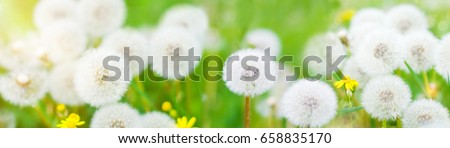 Banner with nature flowers background - web header template - website simple design