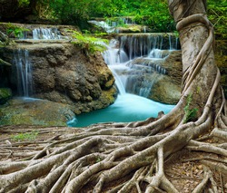 banyan tree and limestone waterfalls in purity deep forest use natural background,backdrop