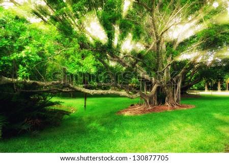 Banyan tree in Miami Botanical Garden