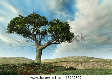 Banyan tree landscape and cloudy sky with grass and small garden. Art piece has warm color cast.