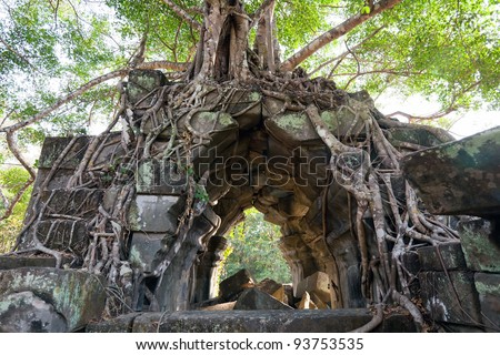 Banyan trees on ruins in Beng Mealea temple, Cambodia - stock photo