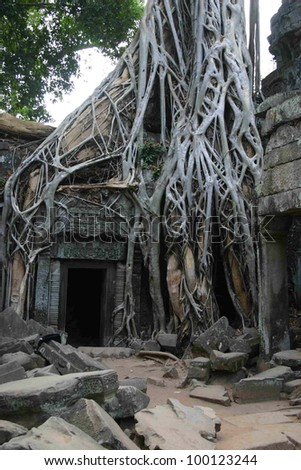 Banyan tress overgrow a temple entrance at Angkor Wat in Cambodia made famous by the laura Croft movie