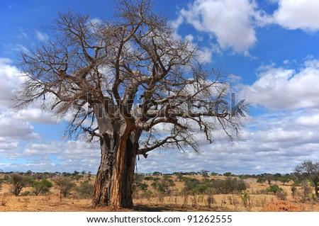 Baobab or boab, boaboa, bottle tree, upside-down tree, and monkey bread tree Tarangire National Park is the sixth largest national park in Tanzania after Ruaha, Serengeti, Mikumi, Katavi and Mkomazi