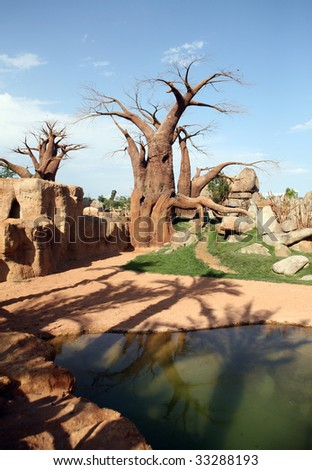 Baobab trees in bioparc in Valencia - stock photo