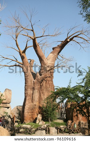 Baobab trees in Biopark Valencia - stock photo