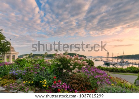 Bar Harbor in the summer with blooming flowers at sunrise