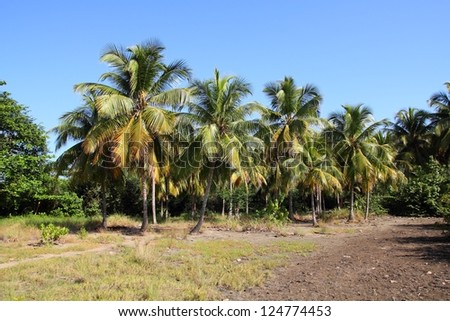 Baracoa, Cuba - coconut palm trees, natural landscape