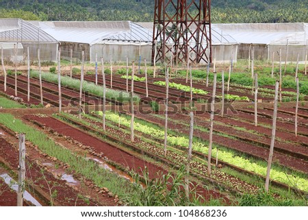 Baracoa, Cuba - vegetable fields and greenhouses, Cuban farming and agriculture