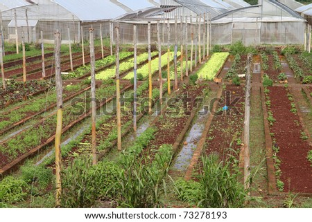 Baracoa, Cuba - vegetable fields and greenhouses, Cuban farming and agriculture #73278193