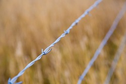 Barb wire country fence in a grass field to keep animals confined to one area.