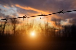 Barbed wire against the backdrop of a beautiful sunset and evening forest. Blurred background