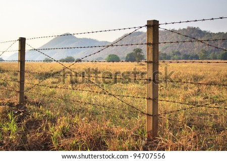 Barbed wire fence and grass field