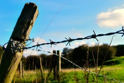 Barbed wire fence in English pasture.