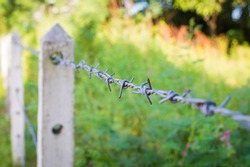 Barbed wire fence in overgrown plant or garden