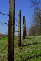 barbed wire fence on wooden poles with blue sky