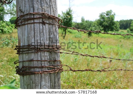 Barbed Wire Fence. stock photo : Barbed Wire