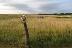 Barbed wire fence with a straw cowboy hat in a hay field