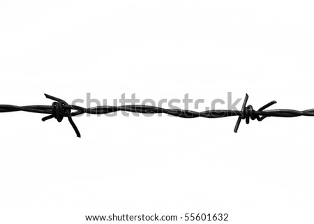 Barbed wire isolated on white. Symbol of danger. - stock photo