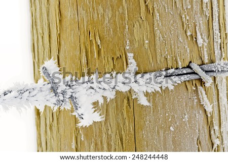 Barbed wire on a fence post with frost