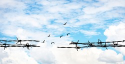 Barbed wire on bright sky background and Birds, Open up your mind and ideas concept, Think out of the box concept, peace concept