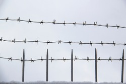 Barbed wire on the fence against light background in the winter  cloudy day