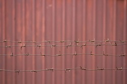 Barbed wire. Tin wall. Iron wall. Old mutilated plate. Brown metal wall.