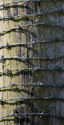 Barbed Wire Wrapped Around Old Wood Texture