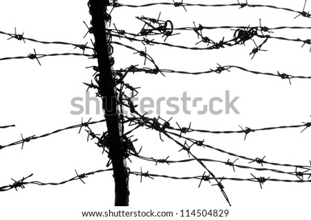 barbed wires on white background
