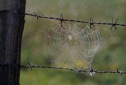 Barbedwire has made a spiderweb