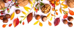 Barberry branches, nuts and autumn leaves. Autumn concept.