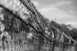 Barbwire on a fence in front of a cloudy sky. Monochrome photo