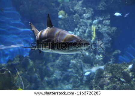 Barcelona Aquarium Spain stock photo