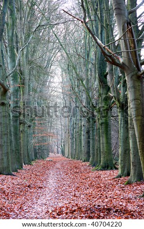 Bare autumn trees in the forrest and falling leaves