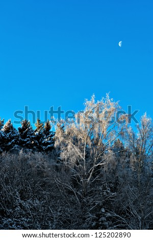 Bare birch tree with rime frost on blue sky with moon