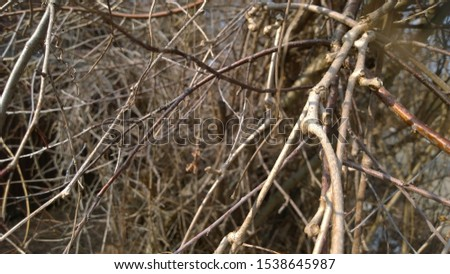 bare branches of a plant in natural light with a blurred background Nature branch of a branch of shrubs